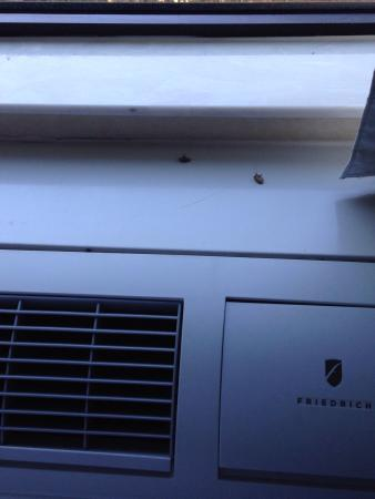 Comfort Suites: Dead bugs in the window