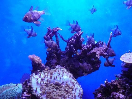 Petit poisson tout mignon picture of palma aquarium for Petit aquarium
