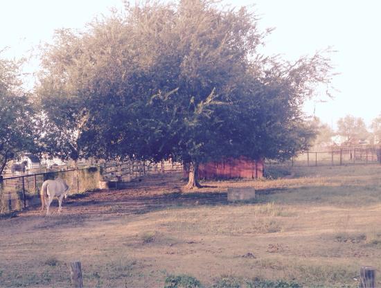 Studio 6 Pleasanton: photo0.jpg