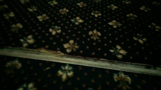 Lyme Bay House: Carpet Issue