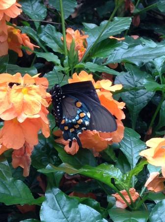 Nice Phipps Conservatory: Phippu0027s Conservatory Butterfly Garden