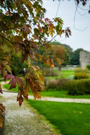Rushen Abbey: The gardens