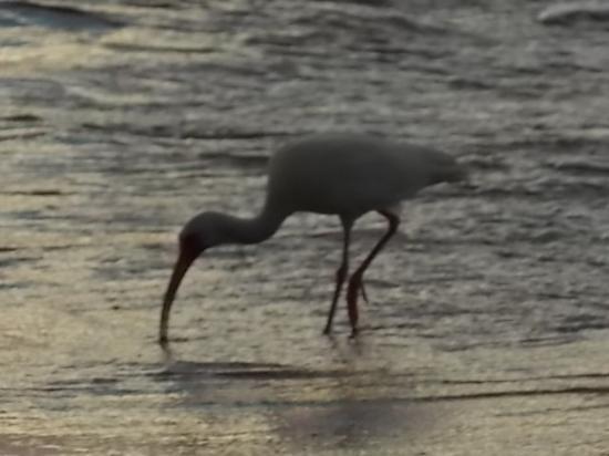 Sun 'n Sea: A sea bird