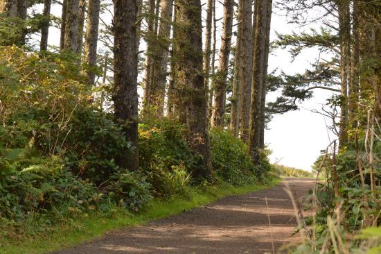 Ilwaco, วอชิงตัน: Walk to North Head Lighthouse