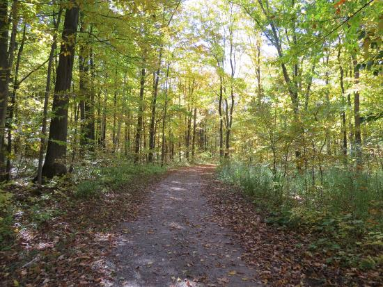 Beautiful Maple Leaf Picture Of Terra Cotta Conservation Area - 6 scenic hikes in halton hills