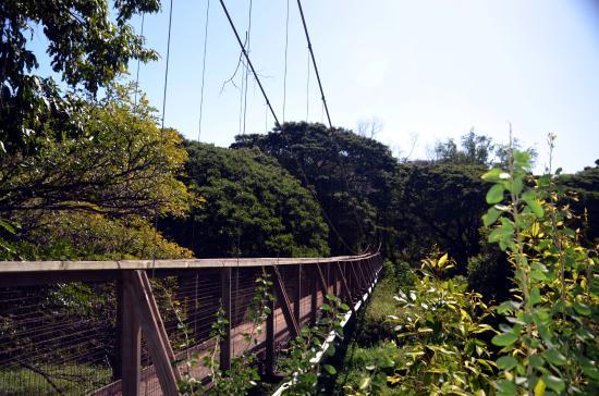 Kiki a Ola (Menehune Ditch): Swinging bridge over Waimea River