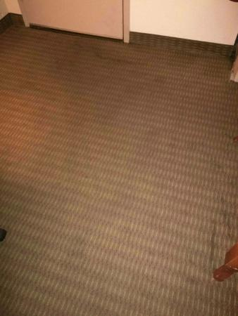 Quality Inn: more filthy carpet