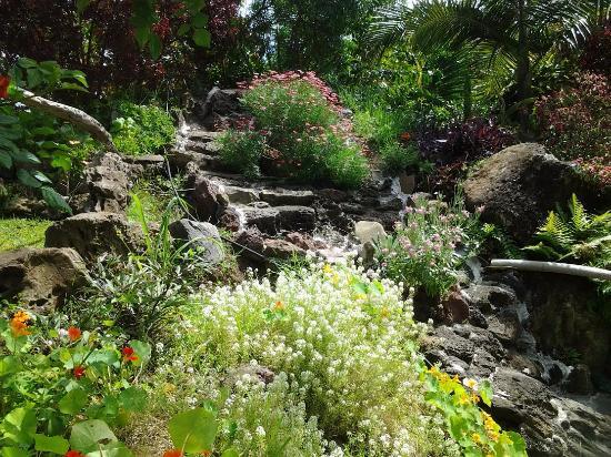 Jardin Tau Kiani Rapa Nui