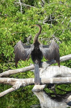 Laguna Ventanilla: Muitos animais!