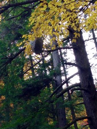 Hancock, VT: Giant Wasps Nest - Texas Falls