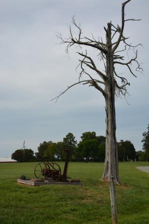 Historic Rural Hill Farm: Dead Cedar #2. Clean Shot