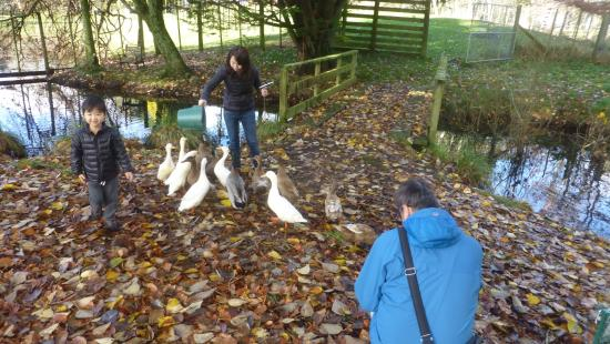 Mokoia Downs Estate B&B: Feeding the duck at the river