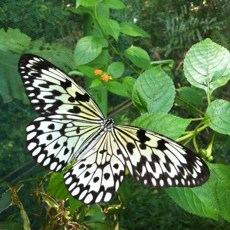 Butterfly Sanctuary at Mambukal Resort : One of the butterflies