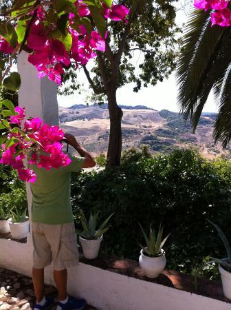 El Tejar : View from the patio