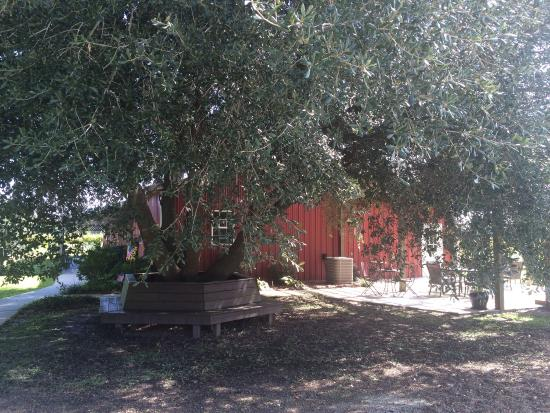 Richlands, Βόρεια Καρολίνα: Delightful winery, family owned. Nice little gift shop too. Try their Apple wine, very refreshin