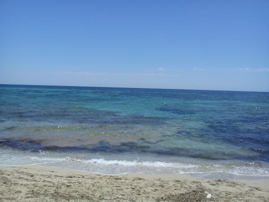 Ses Eufabietes: Strand mit Seegras ( keine Algen)