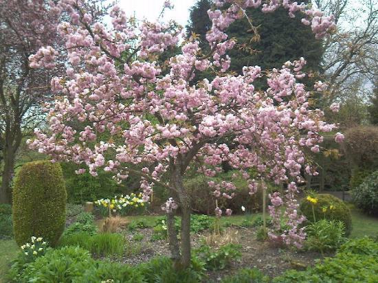 Stanton Hall Gardens And Nursery The Lower Spring Garden