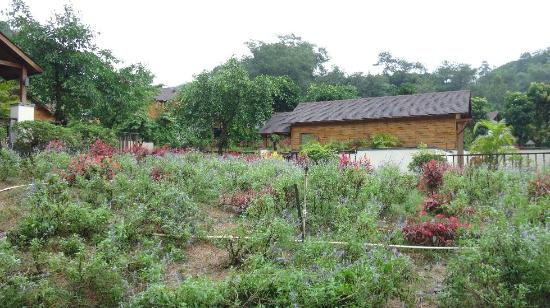 Panlong Paradise Resort: lavender field cottages