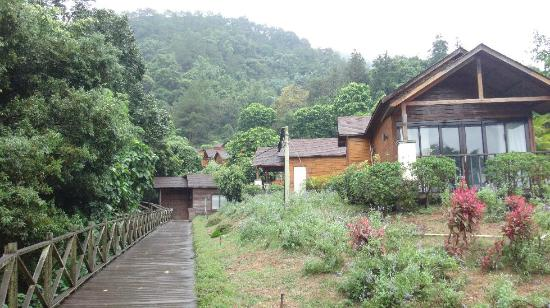 Deqing County, الصين: lavender cottages