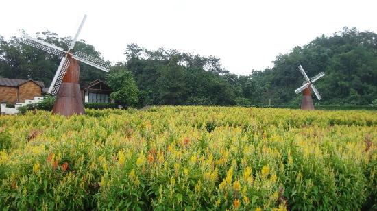 Panlong Paradise Resort: lavender field