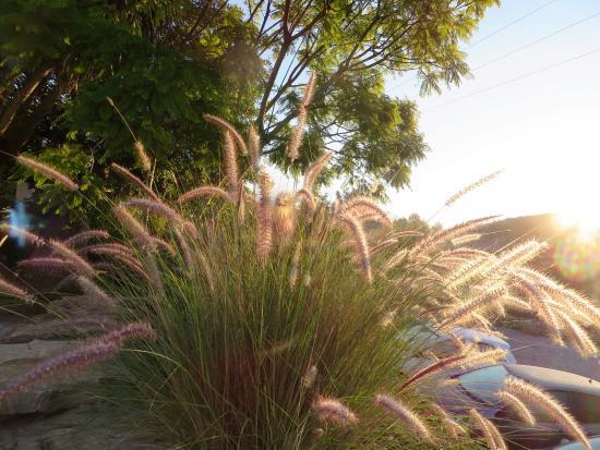 Finca La Colina: omgeving van la Colina