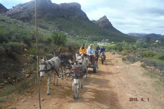 Clanwilliam, Güney Afrika: Donkey carts loaded with hikers' luggage