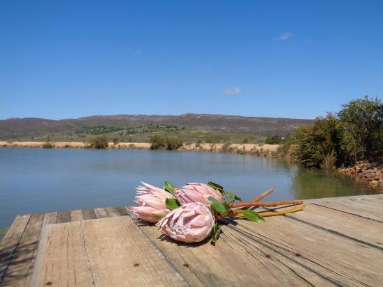 South Hill Vineyards - The Guesthouse: Private deck at The Pumphouse