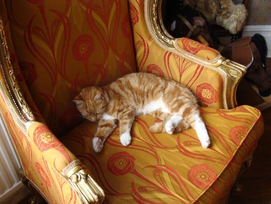 Plas Llwyd: The owners' cat