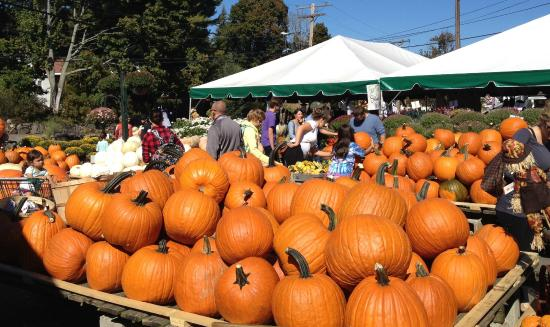 Lexington, MA: Wilson Farm is a great place to buy pumpkins