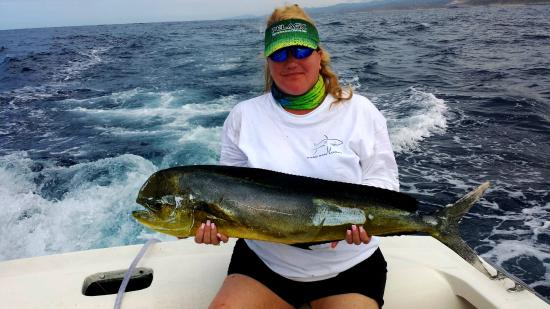 Dorado picture of pisces sportfishing cabo san lucas for Pisces fishing cabo