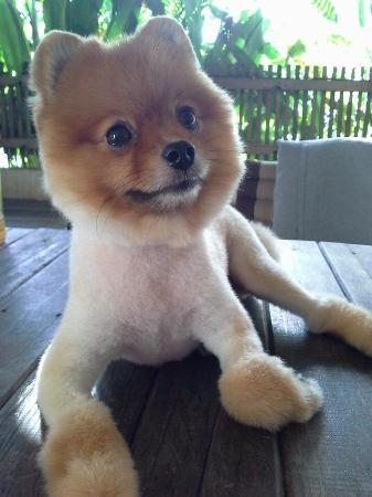 Ban Kong Rao : Nice little dog