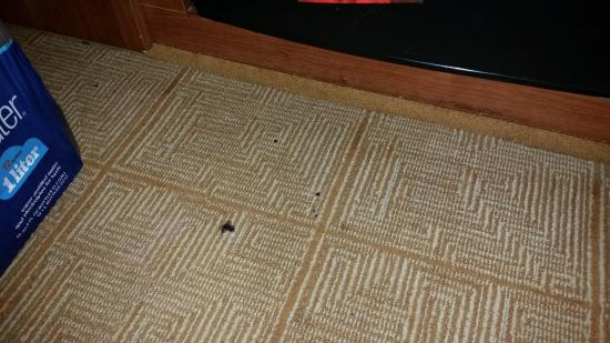 Hyatt Place Detroit / Utica: needs to be vacuumed. Not vacuumed daily.