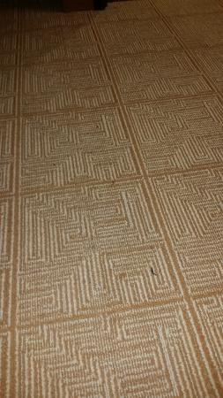 Hyatt Place Detroit / Utica: Dirty carpet
