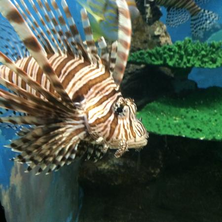 Hekinan Seaside Aquarium - Hekinan Youth Maritime Science Museum: 碧南海浜水族館 碧南市青少年海の科学館