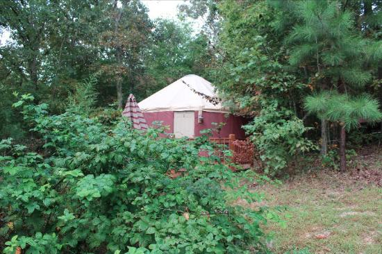 Blanche Manor Yurts: We loved our stay! There was so much space! They had a microwave and fridge! The property was be