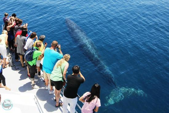奥克兰鲸鱼海豚观赏航行