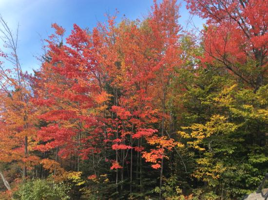 Milan, NH: Can't beat Foliage in New Hampshire!!