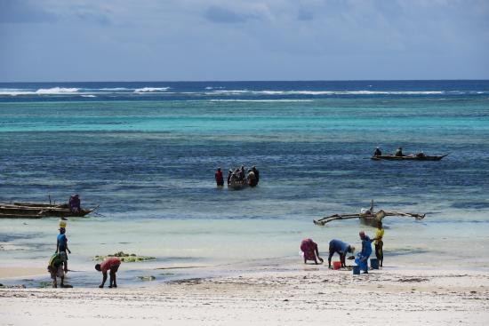 Занзибарский архипелаг, Танзания: 朝は漁の人たちがいま