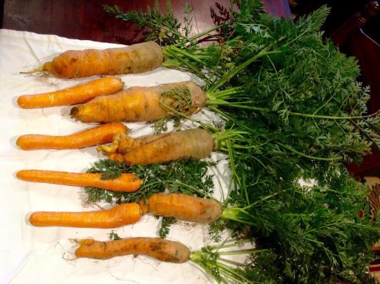 Saint-Pompont, ฝรั่งเศส: Je n'avais jamais vu de carottes aussi titanesque! Le clos Mandalou un endroit unique pour venir