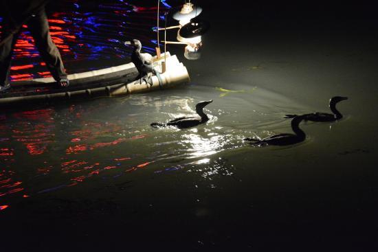 Cormorant Fishing : fishing by lamplight