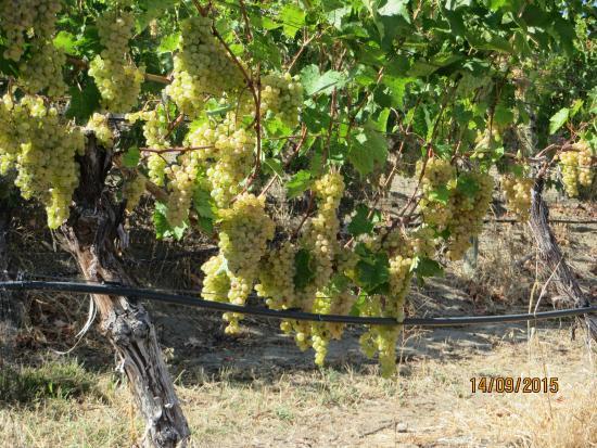 Summerland, Canada: Thornhaven fruit growing