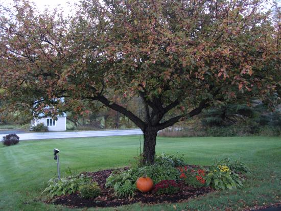 Braeside Lodging : The yard outside our room - with pumpkin!