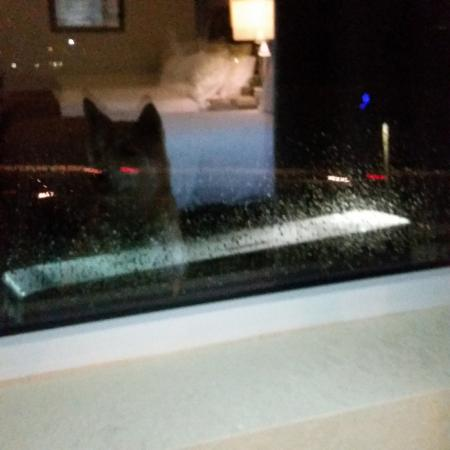 Holiday Inn Lansdale: my dogs reflection out the big window