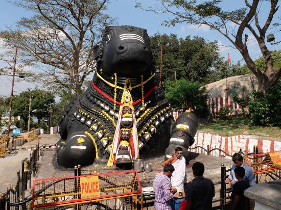 Sri Chamundeshwari Temple: Mysore: Nandi-Shri Chamundeshwari temple