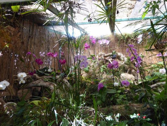 Lovely walk around the garden picture of jardin de for Jardines de orquideas