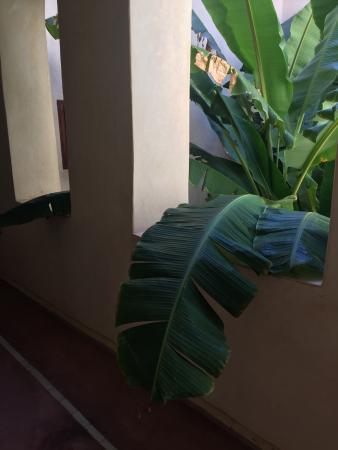 Riad les Inseparables: photo0.jpg