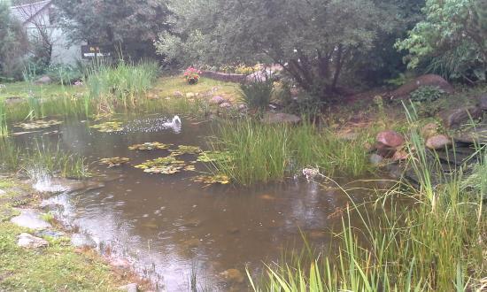 Trochu Arboretum & Gardens: A small pond