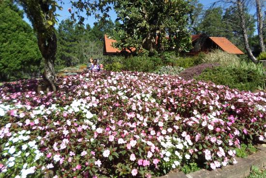 Le jardin picture of le jardin parque de lavanda for Jardines de lavanda