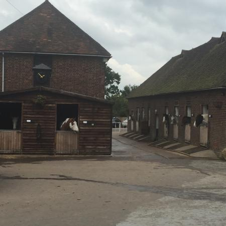 Trent Park Equestrian Centre Photo2