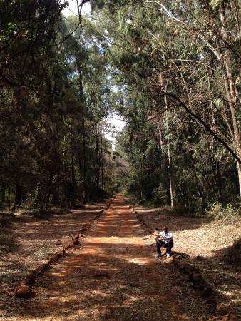 Nairobi Arboretum Photo
